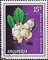 Stamp of Albania - 1974 - Colnect 354130 - Bearberry Arbutus uva ursi.jpeg