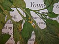 Starr-050427-0759-Solanum americanum-voucher 050406 6-Moku Mana north-Maui (24747346635).jpg