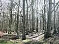 Start of the forest - geograph.org.uk - 743598.jpg