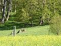 Steinbock in Schloss Zeil - panoramio.jpg