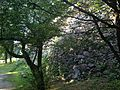 Stone wall of Tamon-yagura of Fukuoka Castle 3.JPG