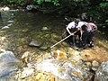 Students search for macroinvertebrates (5939698025).jpg