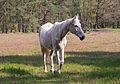 Stukenbrock - 2016-05-01 - Senner Pferde Moosheide (089).jpg