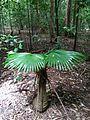 Sulawesi trsr ph10.jpg