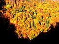Sulina na jeseň - panoramio.jpg