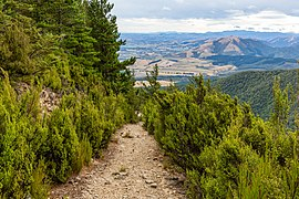Summit Track to Mt Thomas, Mount Thomas Forest Conservation Area, Canterbury, New Zealand 02.jpg