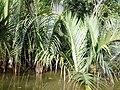 Sundarban (60).jpg