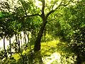 Sundarbans 02.jpg