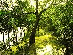 Sundarbans, Bangladeş