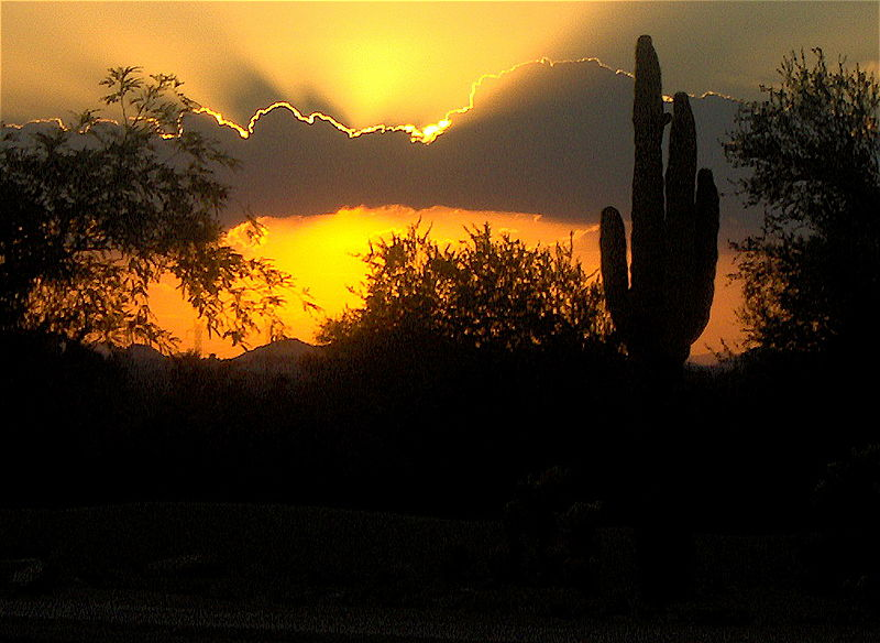 File:Sunset and cactus.JPG