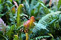 Sunset fern leaves.jpg