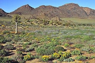 Succulent Karoo Desert ecoregion of South Africa and Namibia