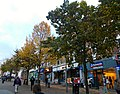 Sutton High Street trees (3).jpg