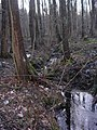 Swelina-3906r-pl.jpg