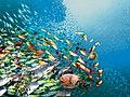 Swirling fish schools.jpg