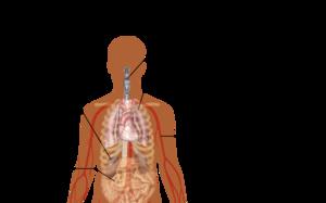 Description de l'image Symptoms_of_coronavirus_disease_2019.png.