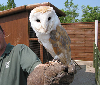 English: Gauntlet Bird of Prey Centre, near Kn...