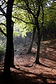 Tandle Hill Woods.jpg