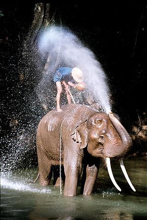 Elefanten – Biologie
