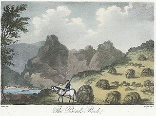 The Birds Rock