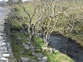 The Caledffrwd above Pont Rhydfadog - geograph.org.uk - 751875.jpg