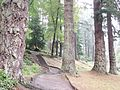 The Cragside Pinetum, Rothbury, England.jpg