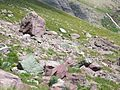 The Glacial conveyor belt left this scree field scattered over and blocking the spur trail leading from Lake Ellen Wilson to the junction above with the Gunsight Pass Trail. July 2007 - panoramio.jpg