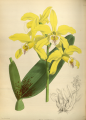 The Orchid Album-01-0071-0023.png