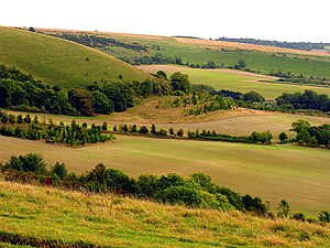 North Wessex Downs - The South Western Slopes of Walbury Hill