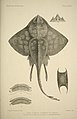 The fishes of Great Britain and Ireland (Plate CLXXI) (6788915588).jpg
