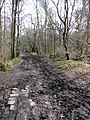 The going gets muddy - geograph.org.uk - 1205736.jpg