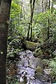 The lovely jungle stream (11949572084).jpg