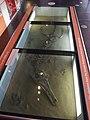 Thinktank Birmingham Science Museum - Wild Life - Metriorhynchus (13904617351).jpg