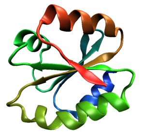 Thioredoxin fold - One molecule of human thioredoxin (PDB ID 1ERT), a canonical example of the thioredoxin fold class.