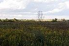 Three Creeks - Prairie 1.jpg