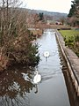 Three Swans A Swimming - geograph.org.uk - 740252.jpg