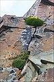Tian Shan (7881185622).jpg