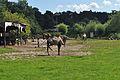 Tierpark Stralsund (2012-08-12), by Klugschnacker in Wikipedia (12).JPG