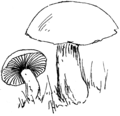 Toadstool (PSF).png
