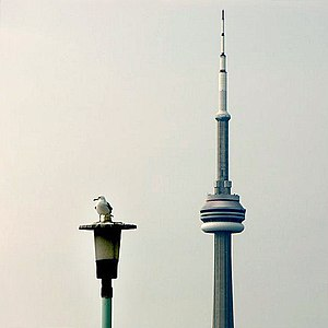 Visual pun - Image: Toronto Towers (1)