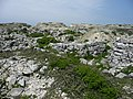 Tout Quarry - geograph.org.uk - 1343227.jpg