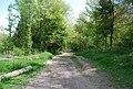 Track, Friston Forest - geograph.org.uk - 1281152.jpg
