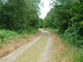 Track in Kissock Forest - geograph.org.uk - 1418441.jpg