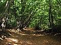 Trackway in woods near Bedmond - geograph.org.uk - 1523145.jpg