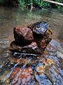 Traditional tribe stone balance.jpg