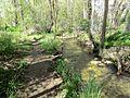 Trail and Creek (34378896806).jpg