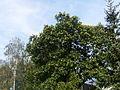 Tree.3565.JPG
