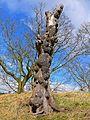 Tree (2423206827).jpg