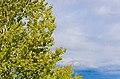 Tree and Sky-147670.jpg