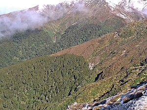 Tree line - An alpine tree line in the Tararua Range